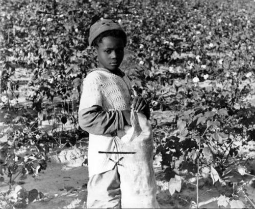 Child in the cottonfield, 1937