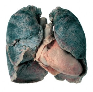Black Lung disease‎